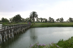 23 giugno 2016 - Marediroma Golf Club